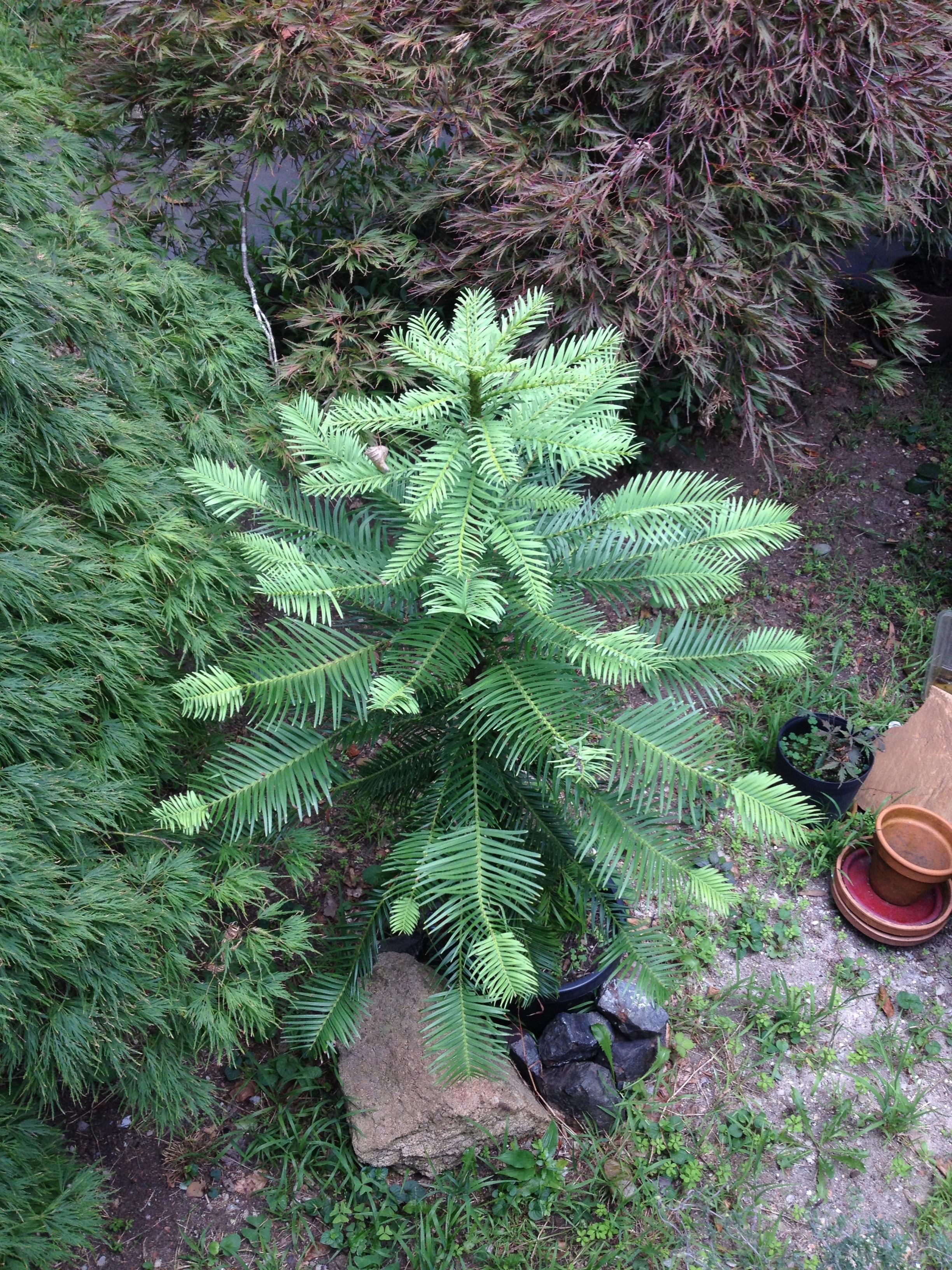 Baby_Tree